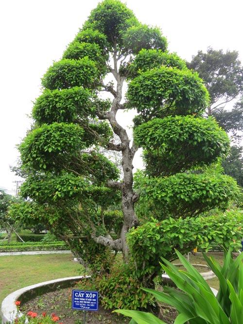 Ý nghĩa nguồn gốc một số cây xanh, kiểng quý trong Khu di tích Nguyễn Sinh Sắc